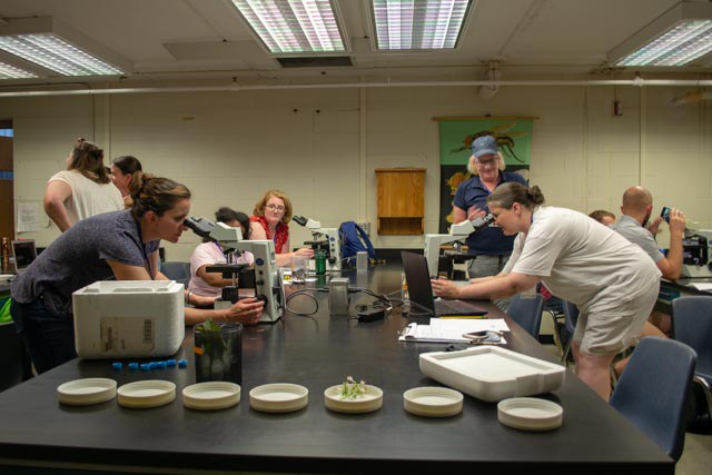 APPL-Red 2019 participants using microscopes to determine pollen collected from pollinators and accompanying plant.