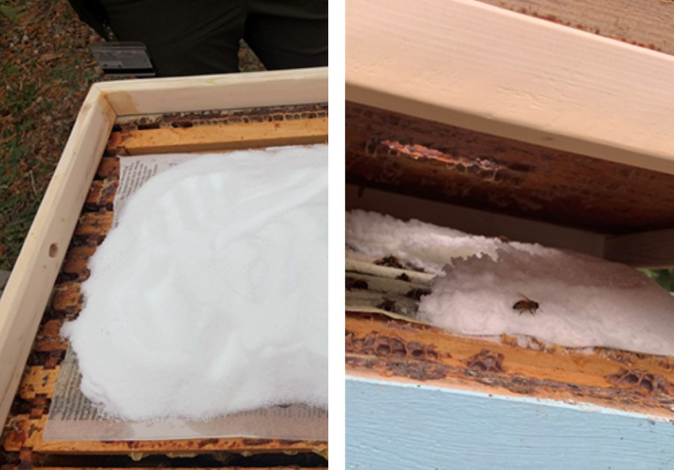 This figure shows the Mountain Camp method of providing supplemental sugar before (left) and after (right) bees have fed on it.