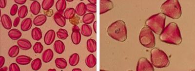 Macro image of Pollen