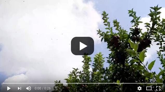 Video lead image