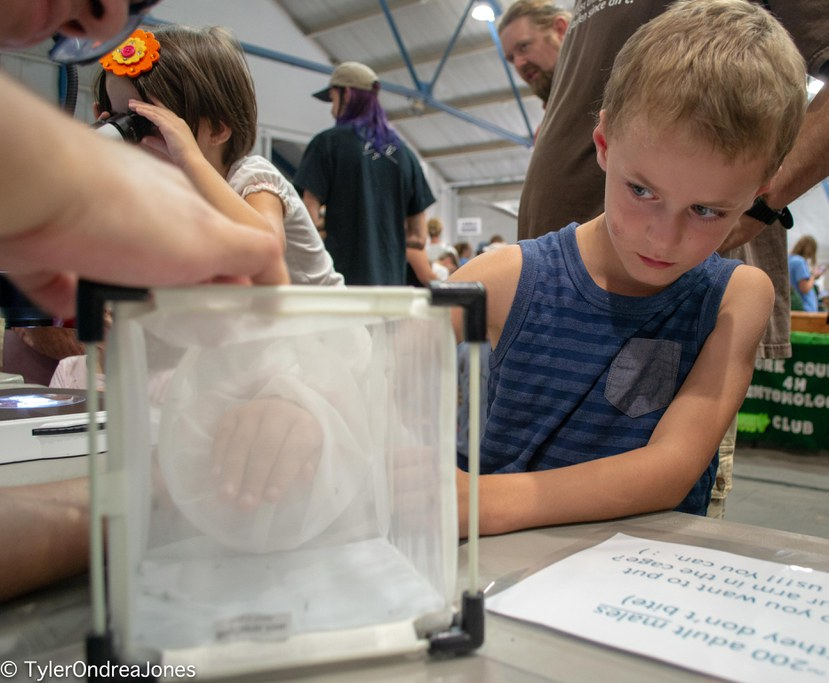 Young Great Insect Fair participant tests whether male mosquitoes really don't bite. Spoiler Alert: they do not.