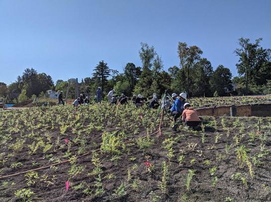 Volunteers installing plants in Fall of 2020. Credit: Shari Edelson, The Arboretum at Penn State