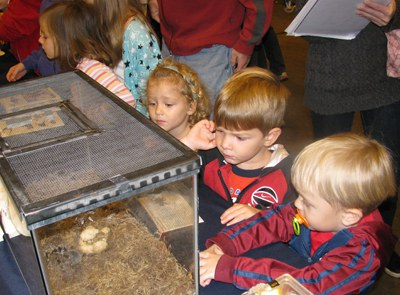 Children enjoying insect zoo