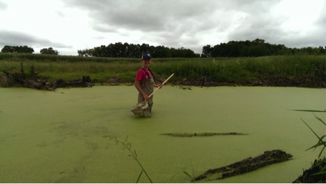 Sarah looking for invertebrates at Penn State's the Living Filter
